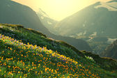 Mountains meadow — Stock Photo