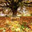 autumn tree — Stock Photo #10252640