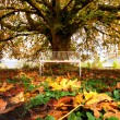 autumn tree — Stock Photo #10467040