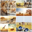 Stockfoto: safari trip