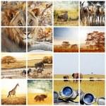 Safari — Stock Photo