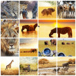 Safari — Stockfoto #10467688