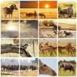 Safari — Stockfoto #10467691