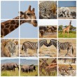 Stock Photo: Safari