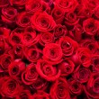 Red rose — Stock Photo #8779387