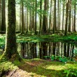 Green forest — Stock Photo #8931472
