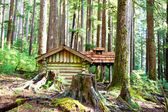 Hut in forest — Stock Photo