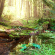 Green forest - Stock Photo