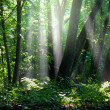 Sunny green forest — Stock Photo #9300609