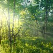 Sunny green forest — Stock Photo #9300612