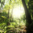 Sunny green forest — Stock Photo #9300615