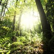 Sunny green forest — Stock Photo