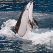 Stock Photo: Dancing Dolphin