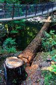 Logging Camp — Stock Photo