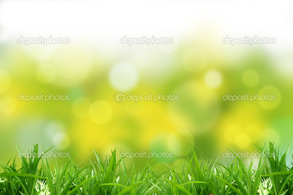 Green  grass and background. A beautiful multicoloured background — Stock Photo #10368815