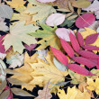Stock Photo: Multicoloured leafs