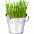 Fresh green grass in a small metal bucket — Stock Photo
