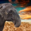 Elephant in the desert — Stock Photo #10476479