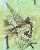 A fragment of the Brazilian banknotes in a real 1994. with a picture of a hummingbird (sapphire amaziliya) — Stock Photo