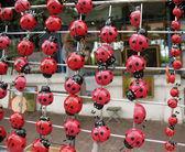 Souvenir ladybugs on magnets — Stock Photo