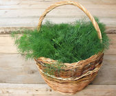 Cut fennel scented (Anethum graveolens) in a wicker basket — Stock Photo