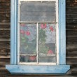 Rustic window with geraniums (Pelargonium) — Zdjęcie stockowe