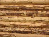 Log fragment from purified round logs — Zdjęcie stockowe