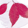 Dry red leaves on the background mesh — Stock Photo