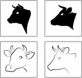 Vache. les têtes d'une vache sur un fond blanc — Vecteur