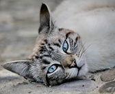 Cat grey — Stock Photo