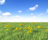 Yellow dandelion flowers on blue sky background, spring photo — Stock Photo