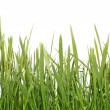 Stock Photo: Fresh green grass (Shallow Dof)