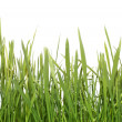 Fresh green grass (Shallow Dof) — Stock Photo