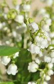 Bukiet lilii — Zdjęcie stockowe