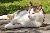 Cat on terrace — Stock Photo
