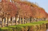 Větve stromů letadlo v barvách podzimu — Stock fotografie