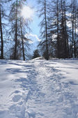 Walk in the snow — Stock Photo