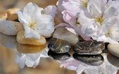 Cherry blossom on pebbles — Stock Photo