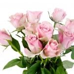 Rose flowers over whitek background — Stock Photo #10521328