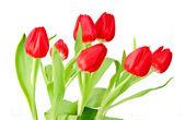 Bouquet di tulipano su sfondo bianco — Foto Stock