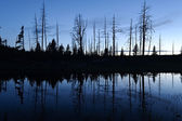 Pond and tree silhouette after sunset — Stock Photo
