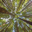 Stock Photo: View on canopy