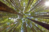 View on the canopy — Stock Photo
