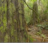 Tree and jungle surroundings — Stock Photo