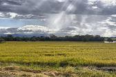 Amazing beams of sunlight on crops — Stock Photo