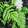 Stock Photo: Vivid fern in shade.