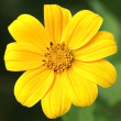 Stock Photo: Yellow flower and green spider