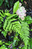 Vivid fern in shade. — 图库照片