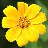 Yellow flower and green spider — Stock Photo
