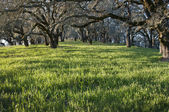Oak trees — Stock Photo